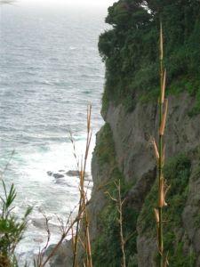 Seaside hill in Japan
